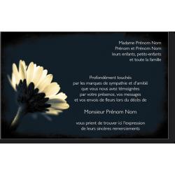 Carte de Remerciements - PAY3